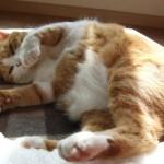 <webライター実践記>第6回 フェリシモ猫部の記事!楽しんで書ける記事は貴重だ~♪